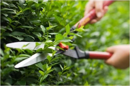 Certificado de profesionalidad: Actividades auxiliares en viveros, jardines y centros de jardinería. Reserva tu plaza!